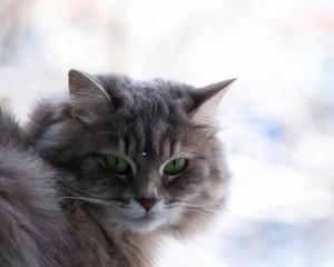 Beautiful cat in the window