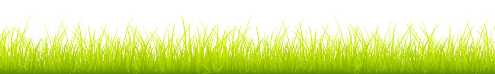 Light Green Meadow Banner