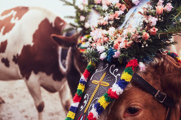 Decorated Cows in Austria