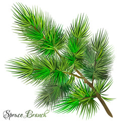 Green spruce branch. Pine branch. Isolated on white background. Vector illustration.