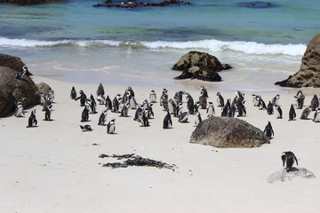 penguins on the beach, south africa