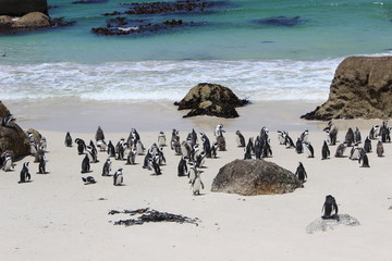 penguins on beach, south africa