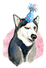 Husky Party dog watercolor drawing