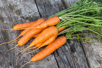 Image with a carrot.