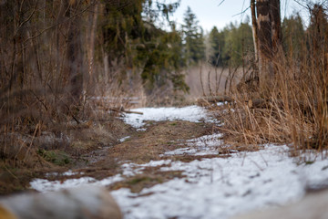 Image of trees and trail with a little bit of snow in forest