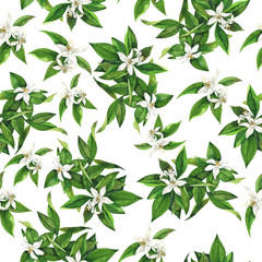 Seamless pattern with orange tree flowers and branches on white background. Hand drawn watercolor illustration.