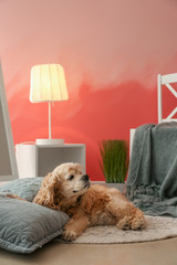 Cute dog near pink wall in interior of room