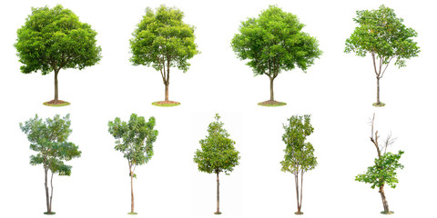 The collection of trees isolated on white background. Beautiful and robust trees are growing in the forest, garden or park. Fototapete