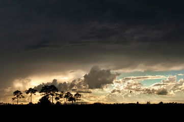 A thunderstorm sweeps over Big Cypress in the Everglades, Florida.