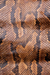Vintage Close Up Dried Real Snake Skin Python Brown and Black