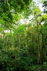Green tropical jungle, rain forest.