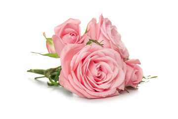 Beautiful bouquet of roses on white background