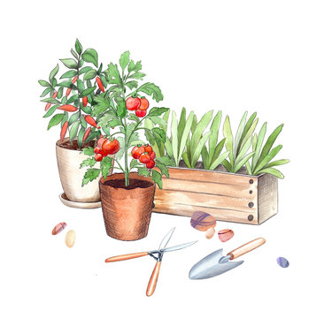 pots with seedlings and vegetables plants, tomato and pepper bushes, pliers and scoop. watercolor and graphics illustration of gardening still life