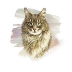 Cute fluffy cat. Watercolor portrait of a kitten. Drawing of a cat with green eyes executed in watercolor. Good for print on T-shirt. Art background, banner for pet shop. Hand painted illustration.
