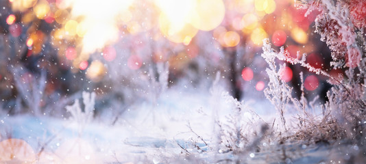Winter Sunny Background with Snowy Branches and Bokeh Effects.