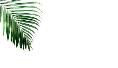 Tropical palm leaves, greenery against white wall. Creative layout, toned image filter, minimalism, copy space