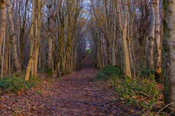 A Path Through Autumnal Trees in Scotland