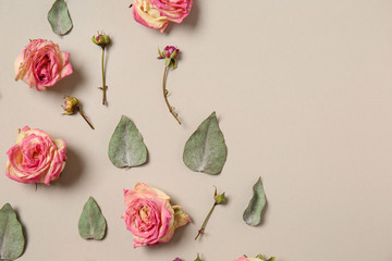 Beautiful dry roses on light background