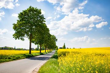 Straße in Rapsfeldern im Sommer