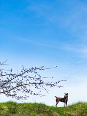 Hund vor blauem Himmel