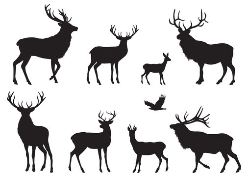 Silhouettes of different Deers and Elks
