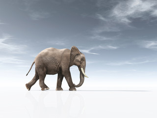 Conceptual image with an  african elephant.
