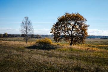 Panorama. Different beautiful autumn trees. Autumn landscape.
