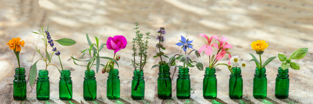 panoramic green essential oil bottle, and flowers cornflower, geranium, lavender, mint, oregano, rosemary, marigold, thyme, basil, bourache, chamomile, tarragon, eucaliptus, granium,