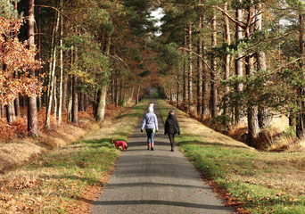 Fototapete - Two females walking along a woodland path with a dog