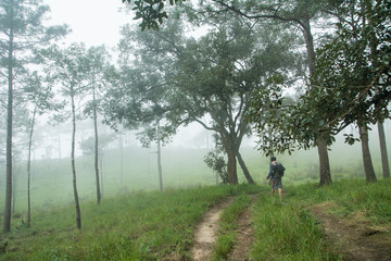 """The man walking on path in green meadow, At """"PHU-SOI-DAO"""" mountains in THAILAND"""