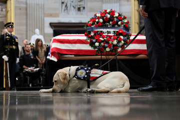 Sully the service dog of former U.S. President George H.W. Bush lays in front of Bush's casket as it lies in state inside the U.S. Capitol Rotunda on Capitol Hill in Washington