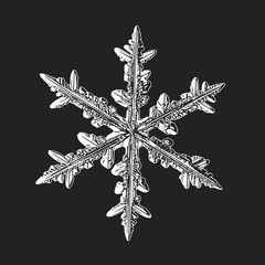 White snowflake isolated on black background. Vector illustration based on macro photo of real snow crystal: large stellar dendrite with hexagonal symmetry, complex ornate shape and six elegant arms.
