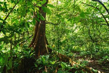Vivid green vegetation of exotic woods