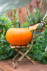 Garden Still Life for Thanksgiving and Halloween / Mini garden scene: small big pumpkin on miniature doll shabby chic chair, peppermint plant at background