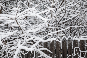 Old wooden fence. Snow on the branches of a tree