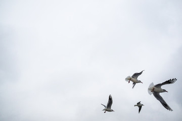 Gulls fly over the lake. It is snowing, winter has come