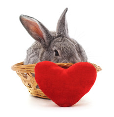Little bunny in a basket with the heart.