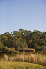 Grass by a lake with trees in the background