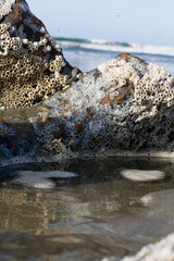 Tidal pool with rocks covered in barnacles