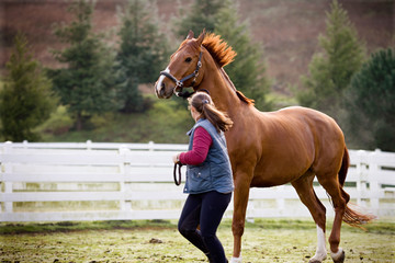 Young woman running with her brown horse in a paddock.