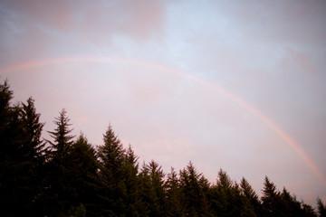 Rainbow above treetops.