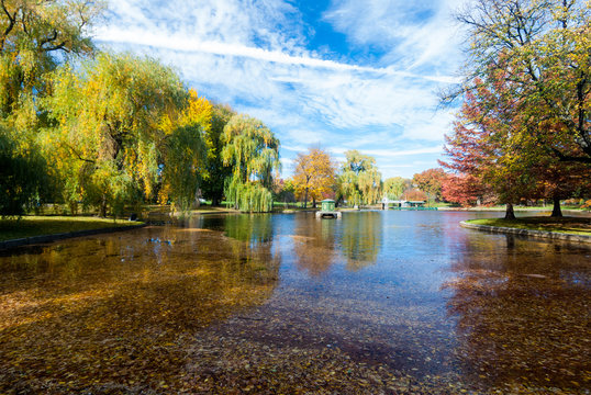 Pond covered with fall leaves in Boston Common park