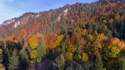 Colourful forest at fall