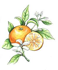 Hand drawn tangerine