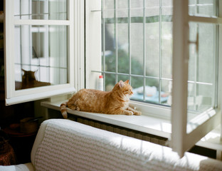 Red cat enjoys sunrays while laying indoors on windowsill