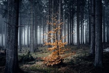 Kleiner Bunter Baum steht in einem dunklen beängstigenden Wald