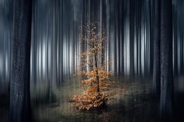 Kleiner Baum im dunklen Wald