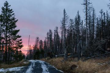 Sonnenuntergang und Waldsterben im Harz, Wanderweg mit Totholz