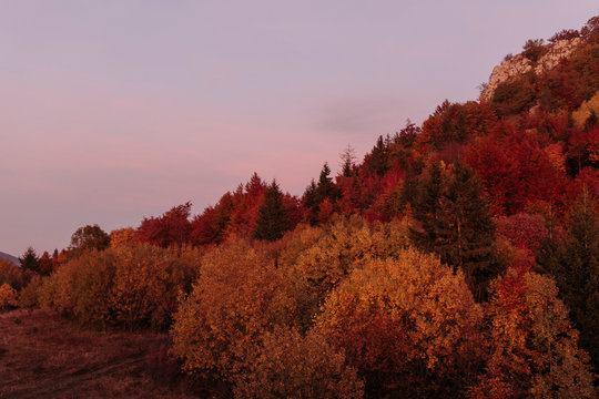 Beautiful colourful forest in the mountains