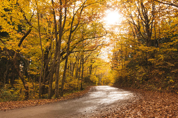 road through forest,autumn season,Japan